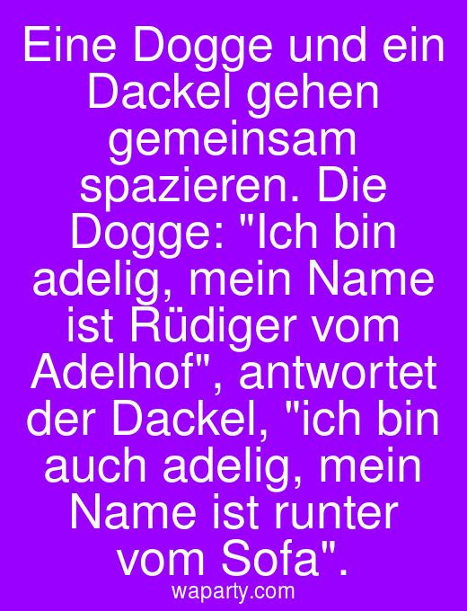 Eine Dogge und ein Dackel gehen gemeinsam spazieren. Die Dogge: Ich bin adelig, mein Name ist Rüdiger vom Adelhof, antwortet der Dackel, ich bin auch adelig, mein Name ist runter vom Sofa.