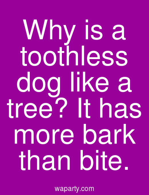 Why is a toothless dog like a tree? It has more bark than bite.