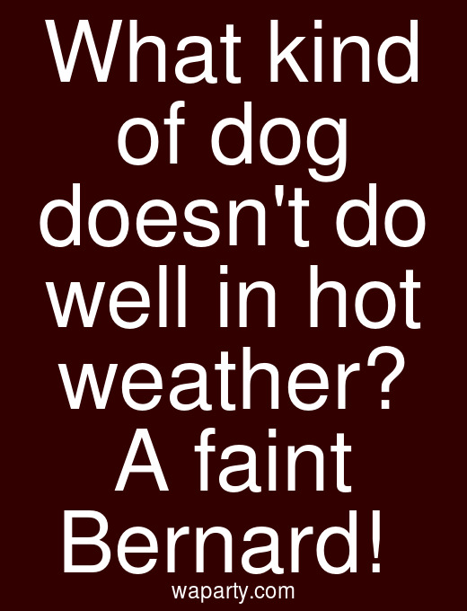 What kind of dog doesnt do well in hot weather? A faint Bernard!