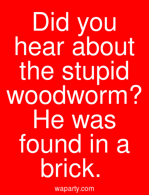 Did you hear about the stupid woodworm? He was found in a brick.