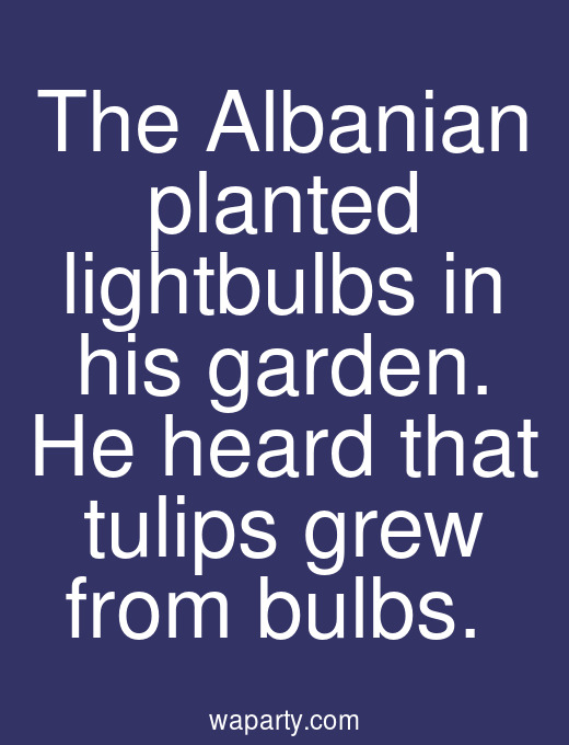 The Albanian planted lightbulbs in his garden. He heard that tulips grew from bulbs.