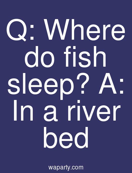 Q: Where do fish sleep? A: In a river bed