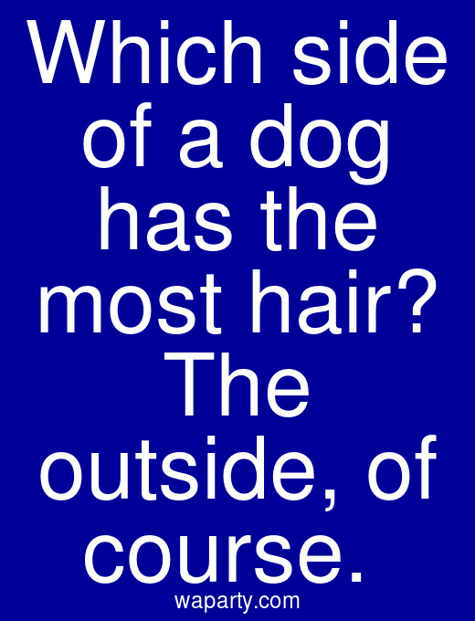 Which side of a dog has the most hair? The outside, of course.
