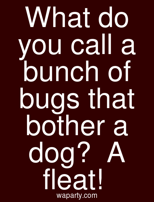 What do you call a bunch of bugs that bother a dog?  A fleat!