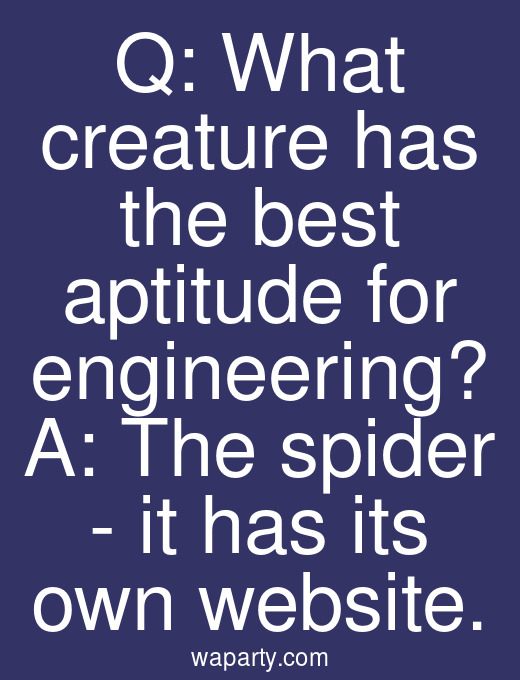 Q: What creature has the best aptitude for engineering? A: The spider - it has its own website.