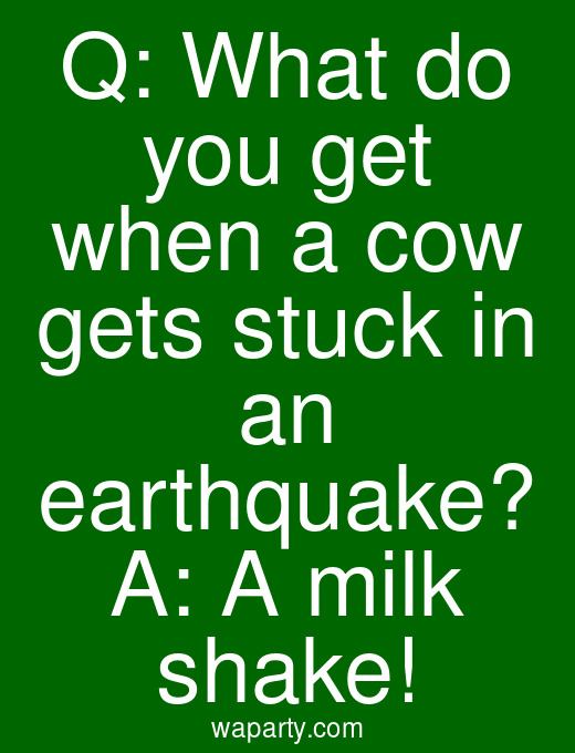 Q: What do you get when a cow gets stuck in an earthquake? A: A milk shake!