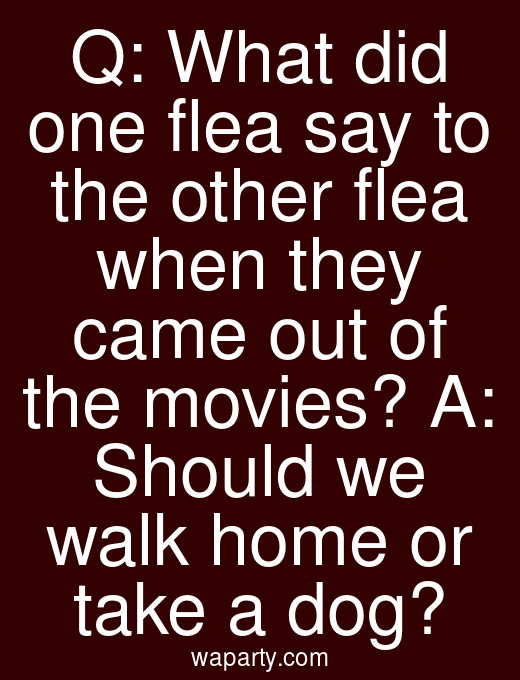 Q: What did one flea say to the other flea when they came out of the movies? A: Should we walk home or take a dog?