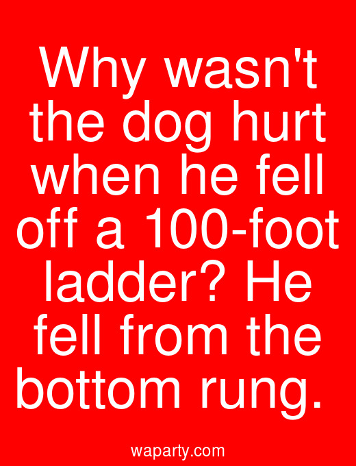 Why wasnt the dog hurt when he fell off a 100-foot ladder? He fell from the bottom rung.