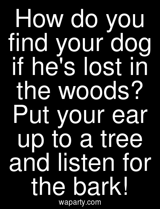 How do you find your dog if hes lost in the woods? Put your ear up to a tree and listen for the bark!