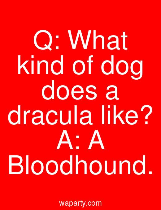 Q: What kind of dog does a dracula like? A: A Bloodhound.