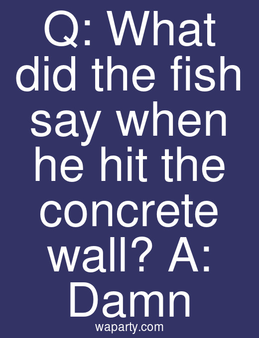 Q: What did the fish say when he hit the concrete wall? A: Damn