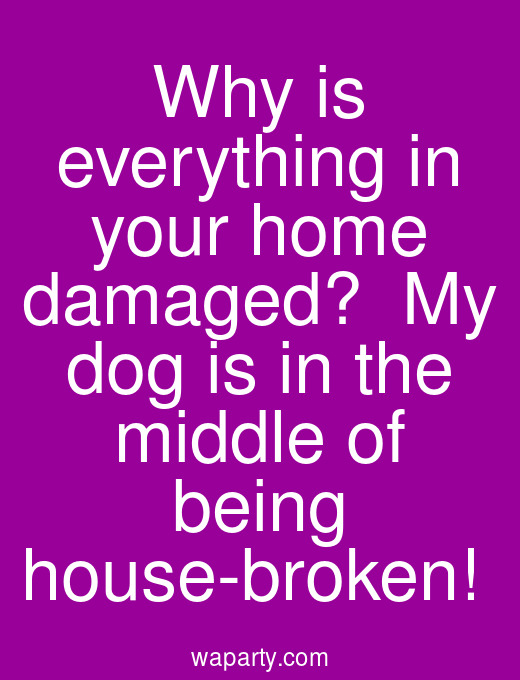 Why is everything in your home damaged?  My dog is in the middle of being house-broken!