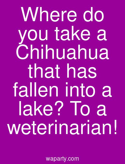 Where do you take a Chihuahua that has fallen into a lake? To a weterinarian!