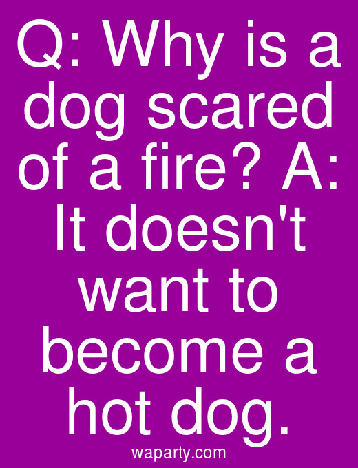 Q: Why is a dog scared of a fire? A: It doesnt want to become a hot dog.