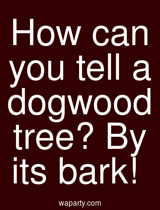 How can you tell a dogwood tree? By its bark!