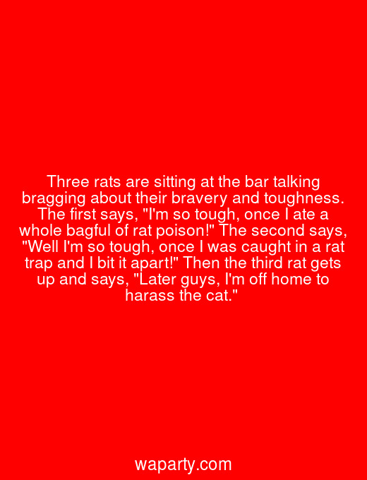 Three rats are sitting at the bar talking bragging about their bravery and toughness. The first says, Im so tough, once I ate a whole bagful of rat poison! The second says, Well Im so tough, once I was caught in a rat trap and I bit it apart! Then the third rat gets up and says, Later guys, Im off home to harass the cat.