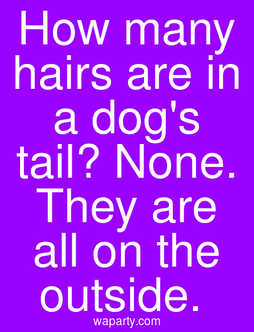 How many hairs are in a dogs tail? None. They are all on the outside.