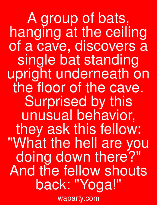 A group of bats, hanging at the ceiling of a cave, discovers a single bat standing upright underneath on the floor of the cave. Surprised by this unusual behavior, they ask this fellow: What the hell are you doing down there? And the fellow shouts back: Yoga!