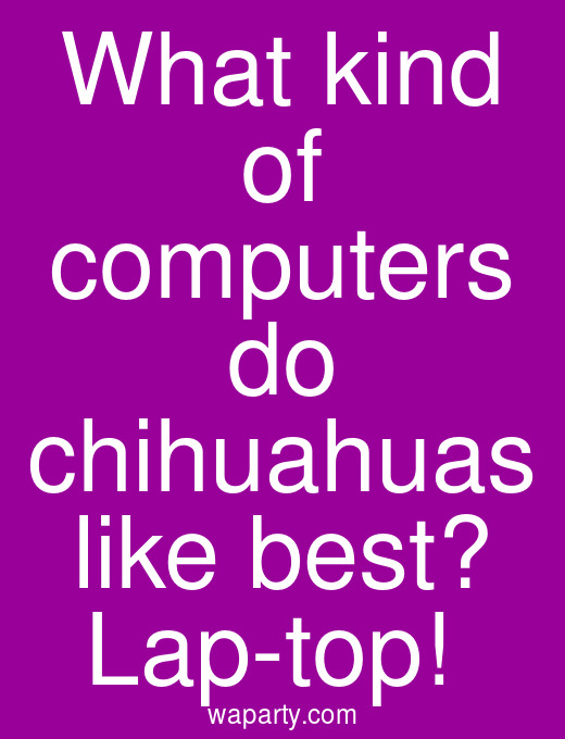 What kind of computers do chihuahuas like best? Lap-top!