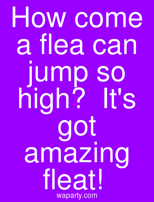 How come a flea can jump so high?  Its got amazing fleat!