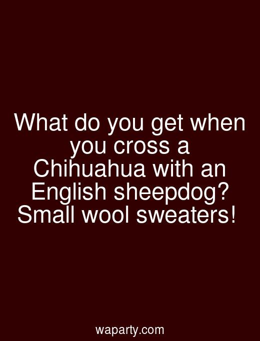 What do you get when you cross a Chihuahua with an English sheepdog? Small wool sweaters!