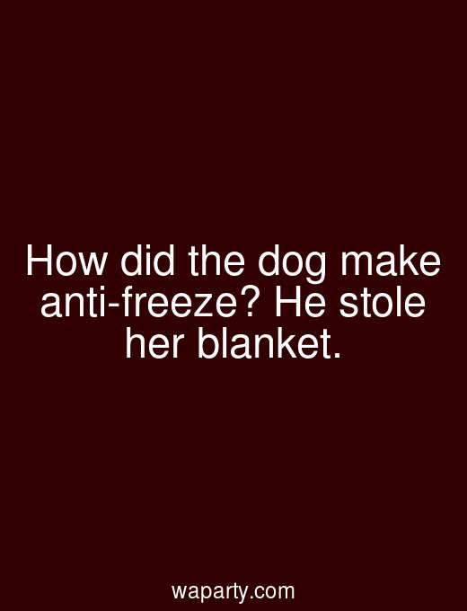 How did the dog make anti-freeze? He stole her blanket.