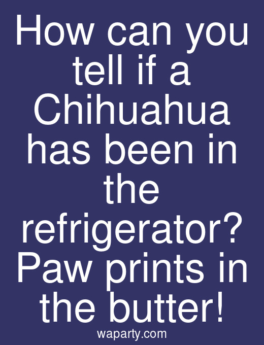 How can you tell if a Chihuahua has been in the refrigerator? Paw prints in the butter!