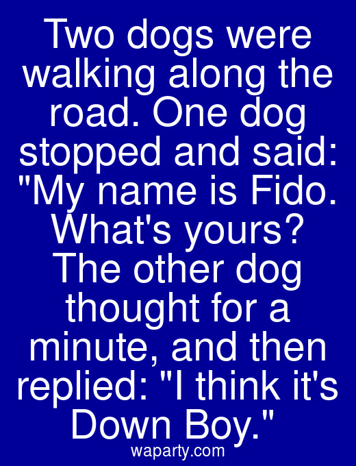 Two dogs were walking along the road. One dog stopped and said: My name is Fido. Whats yours? The other dog thought for a minute, and then replied: I think its Down Boy.
