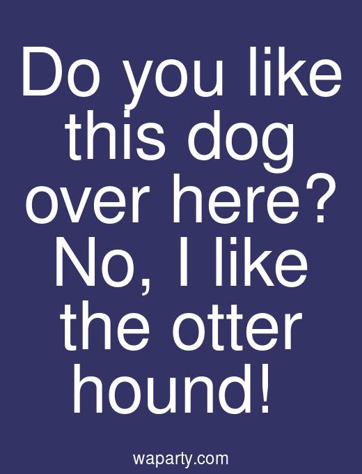 Do you like this dog over here? No, I like the otter hound!