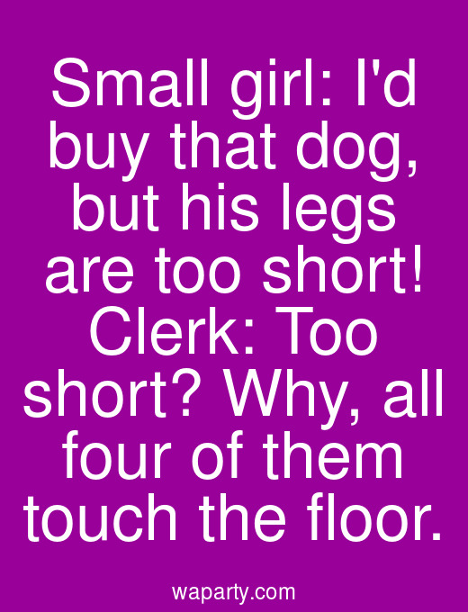 Small girl: Id buy that dog, but his legs are too short! Clerk: Too short? Why, all four of them touch the floor.
