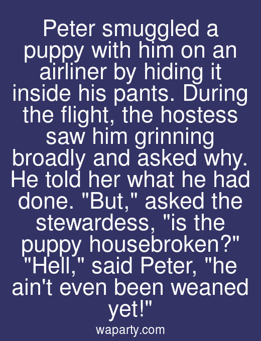 Peter smuggled a puppy with him on an airliner by hiding it inside his pants. During the flight, the hostess saw him grinning broadly and asked why. He told her what he had done. But, asked the stewardess, is the puppy housebroken? Hell, said Peter, he aint even been weaned yet!