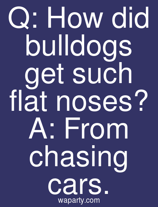 Q: How did bulldogs get such flat noses? A: From chasing cars.