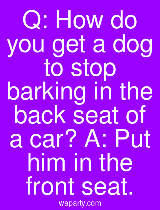 Q: How do you get a dog to stop barking in the back seat of a car? A: Put him in the front seat.