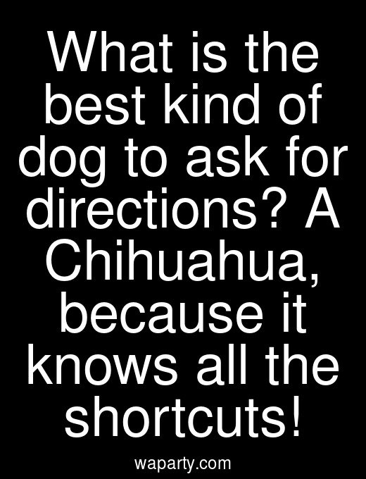What is the best kind of dog to ask for directions? A Chihuahua, because it knows all the shortcuts!