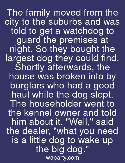 The family moved from the city to the suburbs and was told to get a watchdog to guard the premises at night. So they bought the largest dog they could find. Shortly afterwards, the house was broken into by burglars who had a good haul while the dog slept. The householder went to the kennel owner and told him about it. Well, said the dealer, what you need is a little dog to wake up the big dog.