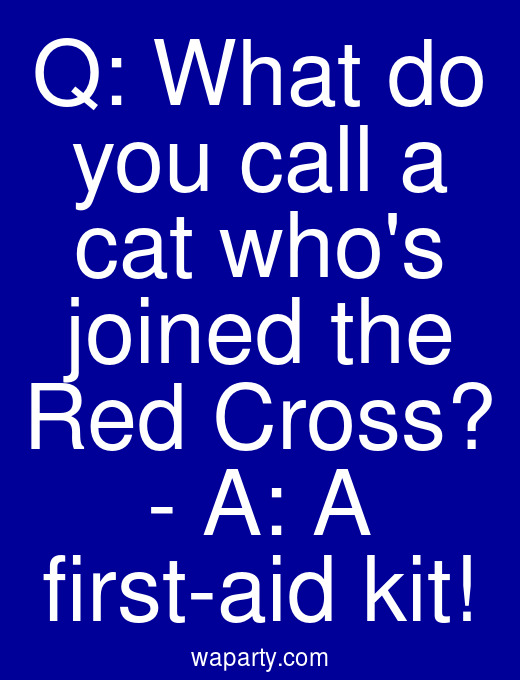 Q: What do you call a cat whos joined the Red Cross? - A: A first-aid kit!