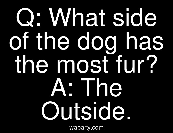 Q: What side of the dog has the most fur? A: The Outside.