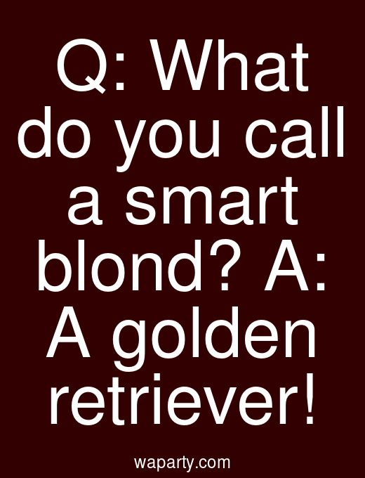 Q: What do you call a smart blond? A: A golden retriever!