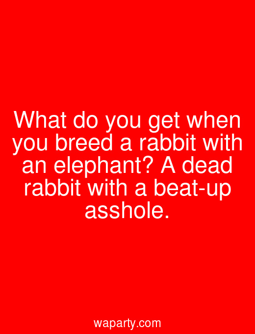 What do you get when you breed a rabbit with an elephant? A dead rabbit with a beat-up asshole.