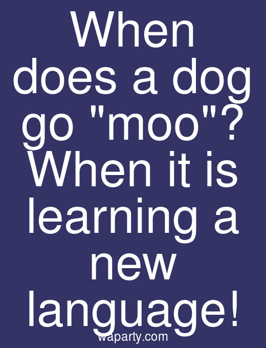 When does a dog go moo? When it is learning a new language!