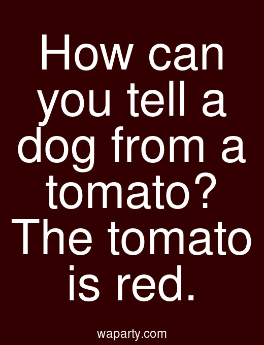 How can you tell a dog from a tomato? The tomato is red.