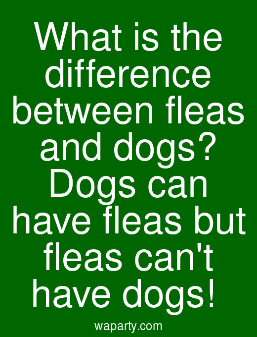 What is the difference between fleas and dogs? Dogs can have fleas but fleas cant have dogs!