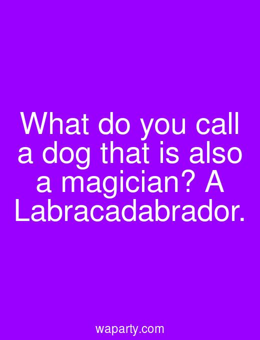 What do you call a dog that is also a magician? A Labracadabrador.