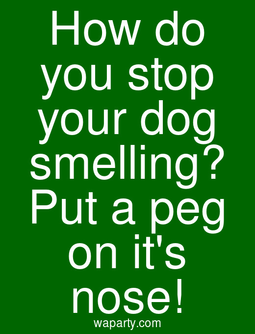 How do you stop your dog smelling? Put a peg on its nose!
