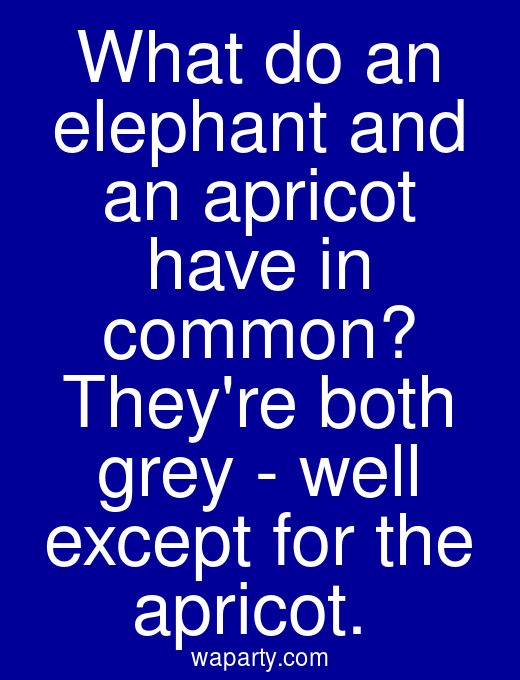 What do an elephant and an apricot have in common? Theyre both grey - well except for the apricot.