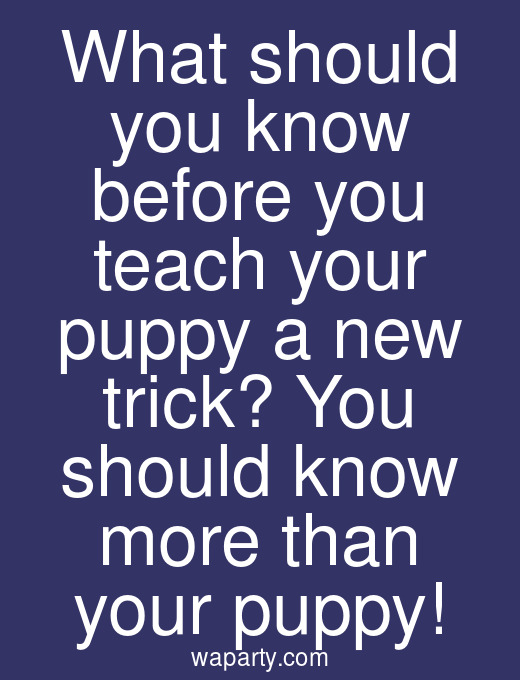 What should you know before you teach your puppy a new trick? You should know more than your puppy!