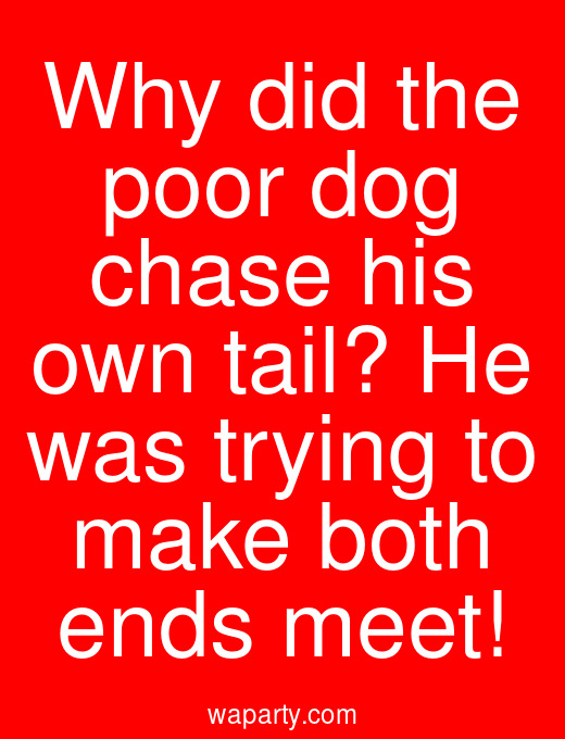 Why did the poor dog chase his own tail? He was trying to make both ends meet!