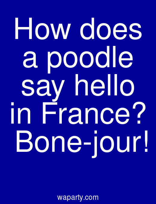 How does a poodle say hello in France?  Bone-jour!