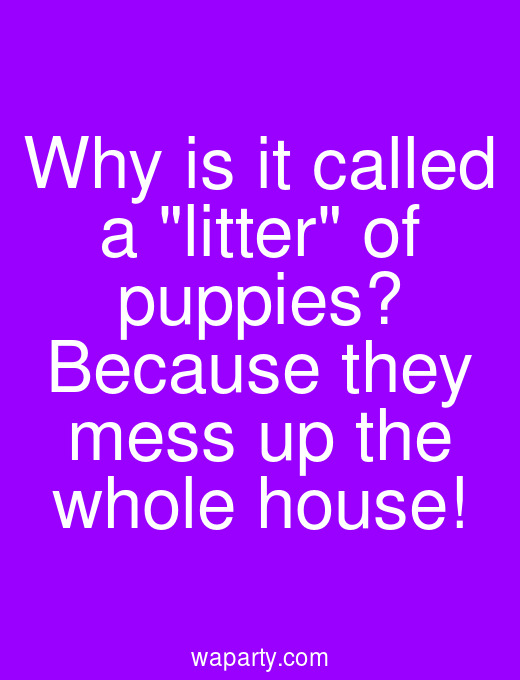 Why is it called a litter of puppies? Because they mess up the whole house!
