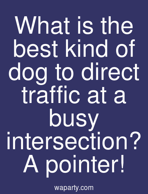 What is the best kind of dog to direct traffic at a busy intersection? A pointer!
